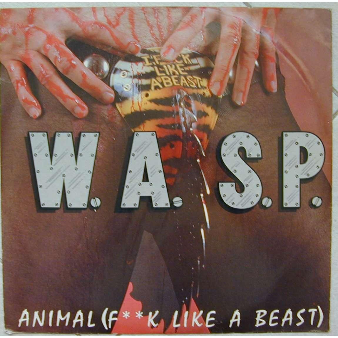 wasp animal